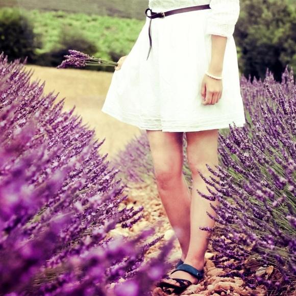 lavenderfields7